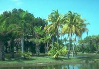 Hoteles en Florida