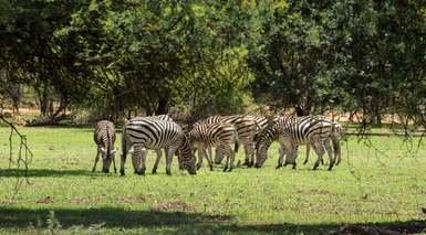 Botswana al Completo y Cataratas Victoria