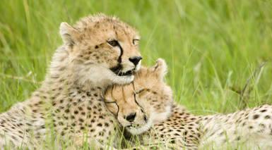 Parques y Reservas Nacionales de Kenia