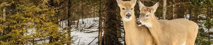 Canadá Este Clásico - Especial Invierno