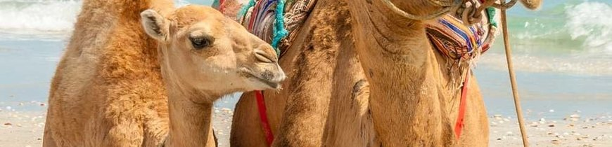Viaje a las playas de Túnez